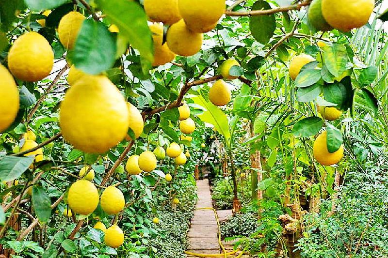 Выращивать лимоны будут в Актюбинской области
