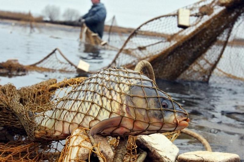 ОПГ браконьеров осудили в Атырау