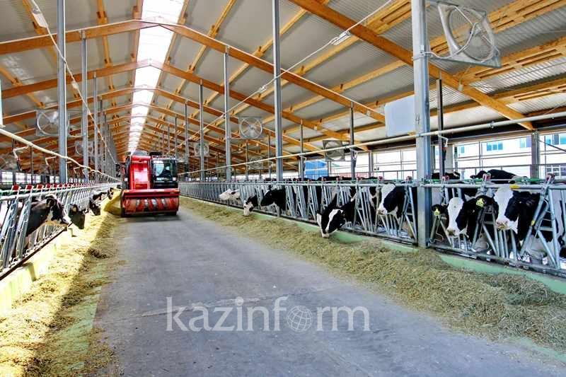 Репродуктивную ферму создадут в Акмолинской области
