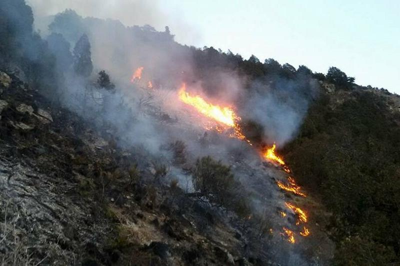 Ликвидирован пожар в горном ущелье Жамбылской области