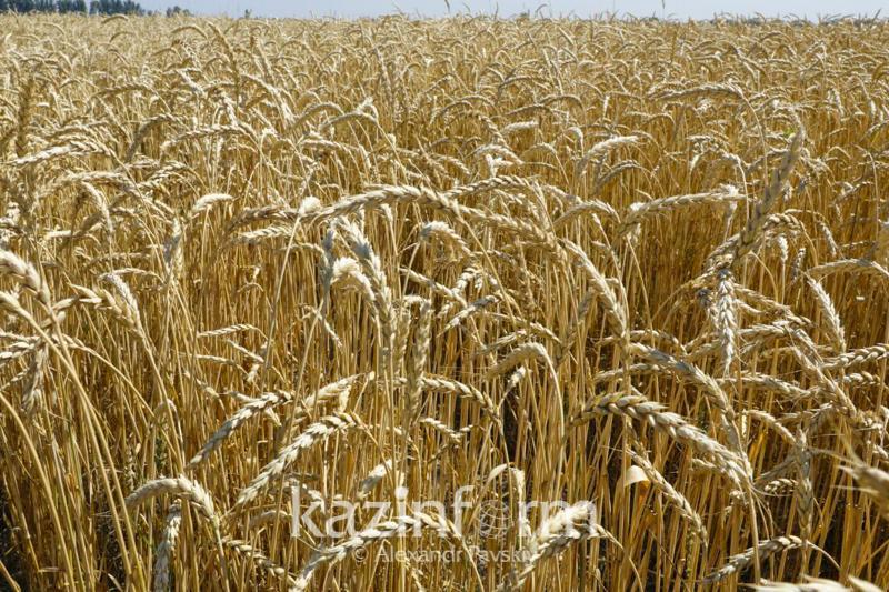 Неиспользуемые сельскохозяйственные земли выявляют в Акмолинскокой области