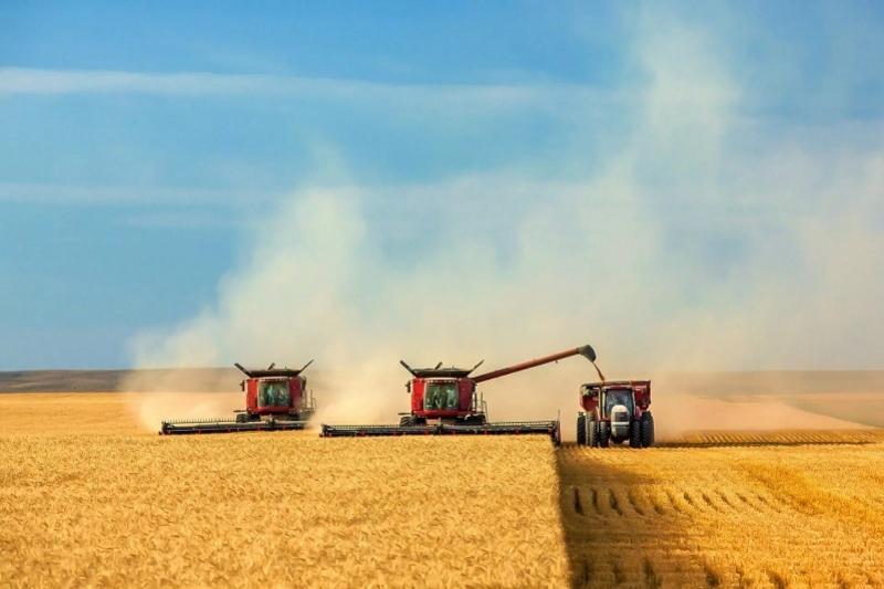 Более 5 млн тонн зерновых планируют собрать в Акмолинской области