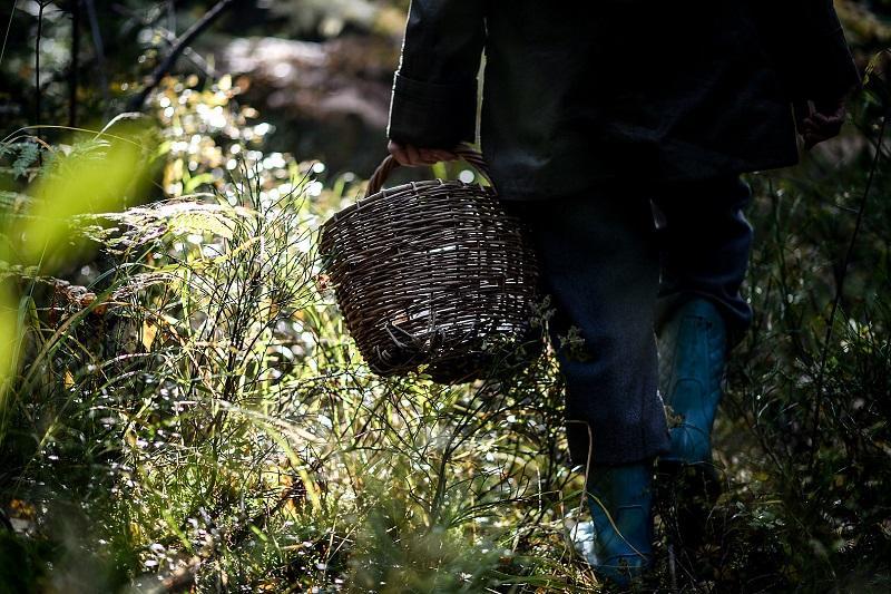 Заблудившуюся семью грибников нашли в Карагандинской области