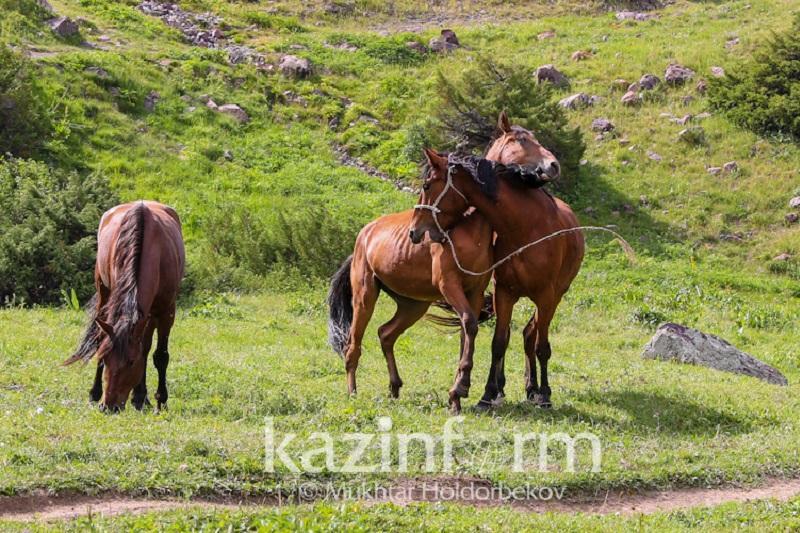 Древний праздник казахов номинирован в список ЮНЕСКО