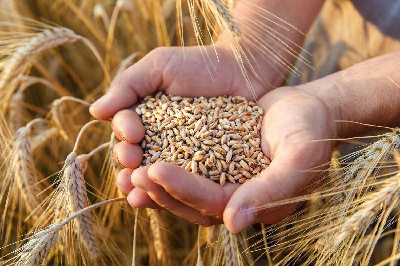 Үкімет аграрлық ғылымды дамытуға назар аударуы тиіс - Елбасы