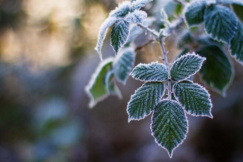 В столице и Акмолинской области ожидаются ночные заморозки