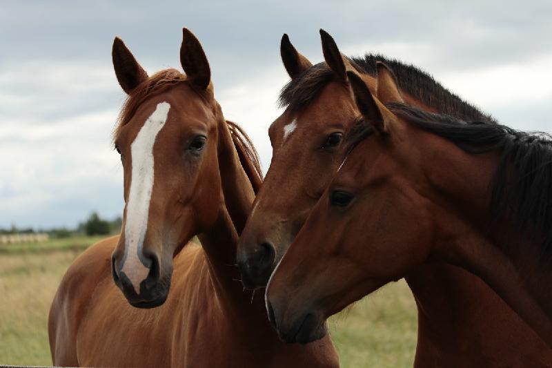В Туркестанской области ликвидирована деятельность ОПГ скотокрадов