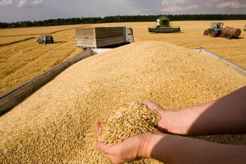 联合国粮农组织下调2018年世界小麦产量预期
