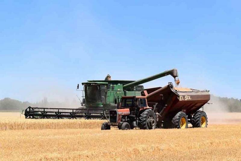 Зерновые убраны с более четверти площадей в Акмолинской области