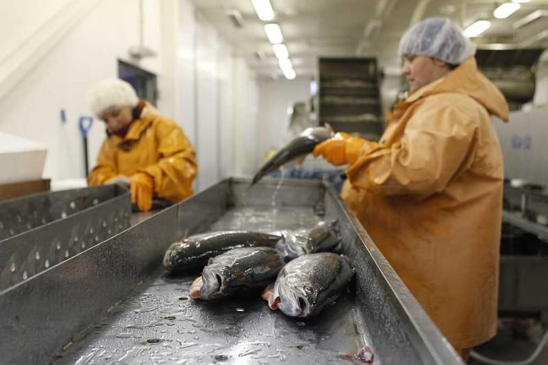哈萨克斯坦正在建设工厂化循环水养鱼车间