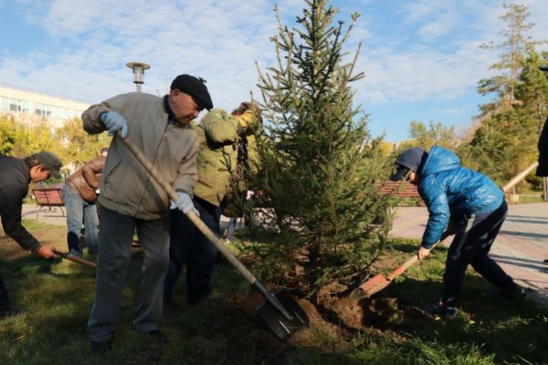Деревья высадили в сквере ветеранов в Павлодаре