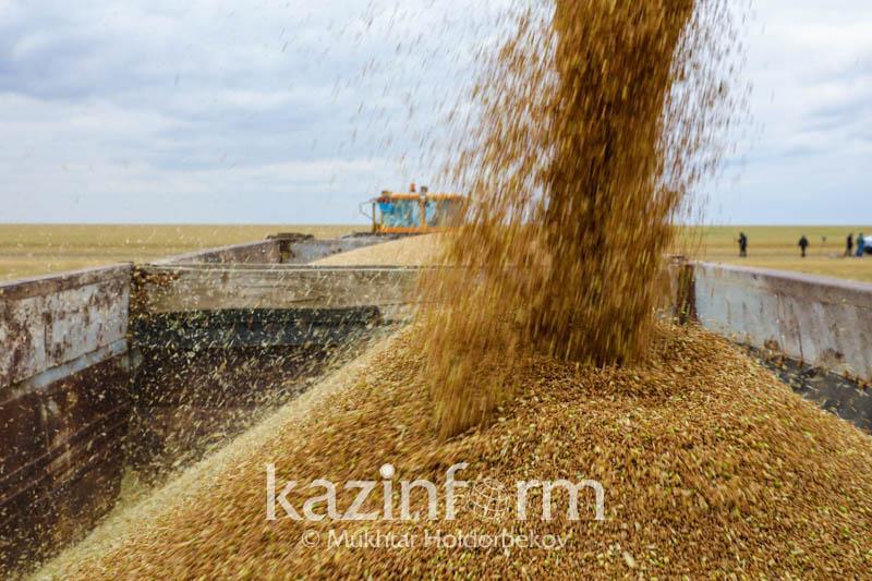 Kazakhstan harvests over 18.1 mln tons of grain
