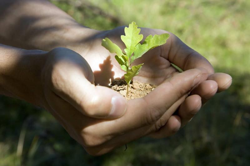 Акцию «Посади дуб» объявили в Павлодарской области