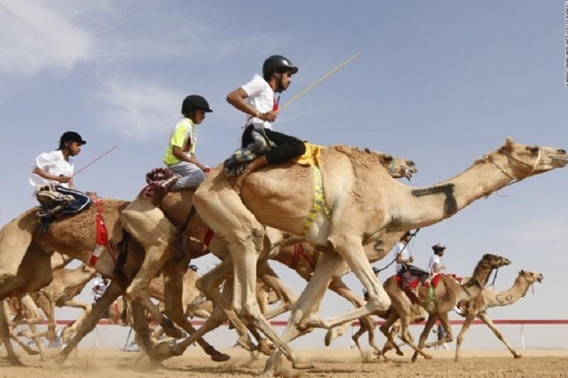 Верблюжьи гонки впервые пройдут в Туркестанской области