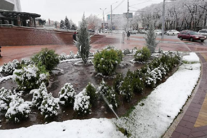 Алматы әкімдігі жауынды күні көк шөптің неге суарылып жатқанын түсіндірді