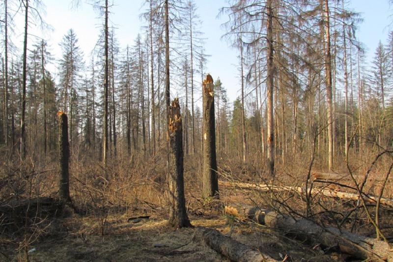 3,000 hectares of forests dried out in Atyrau region