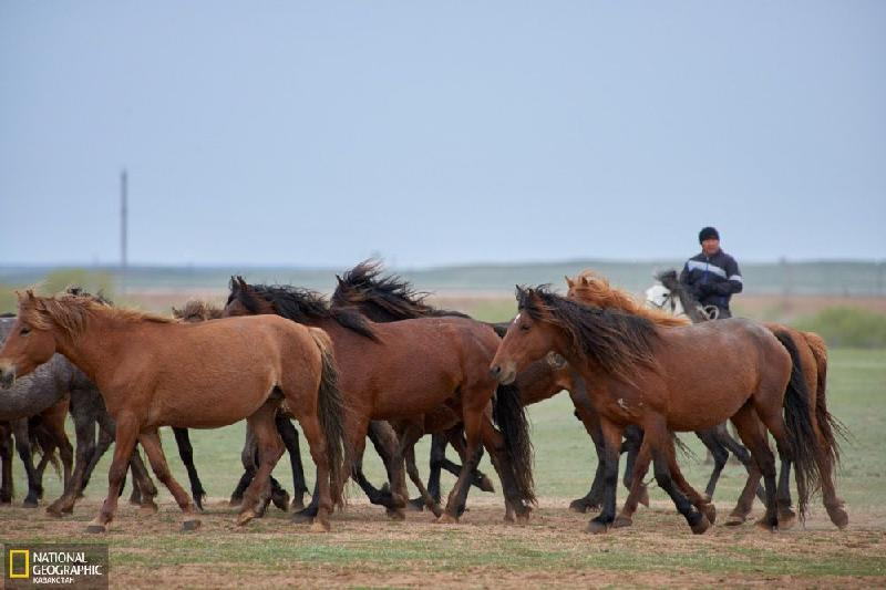 Обряды казахских коневодов признаны ЮНЕСКО культурным достоянием всего человечества