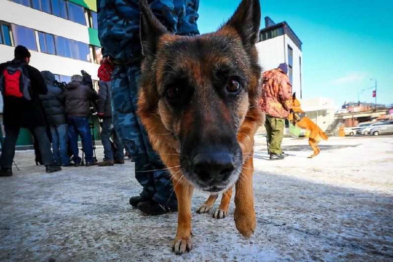 127 преступлений раскрыто с помощью собак в Акмолинской области