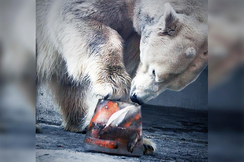 Алматы зообағының ең қарт тұрғыны Алькор 29-ға толды