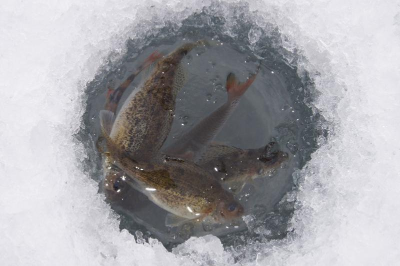 Дарига Назарбаева призвала придать гласности проверки по гибели рыбы на Урале