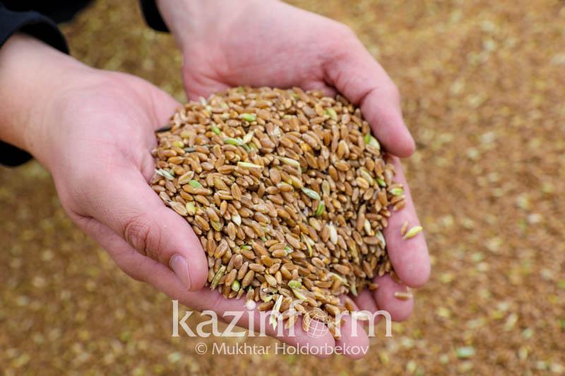 过去两年哈萨克斯坦向阿富汗出口粮食超130万吨