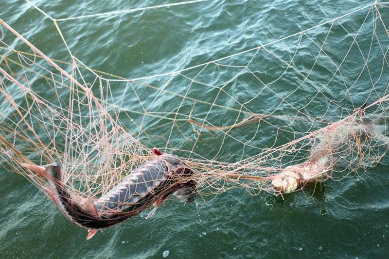 За вылов осетров осудили браконьера в Атырау