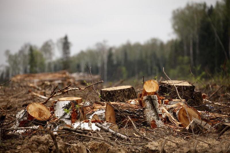 Объем незаконной порубки леса возрос в СКО
