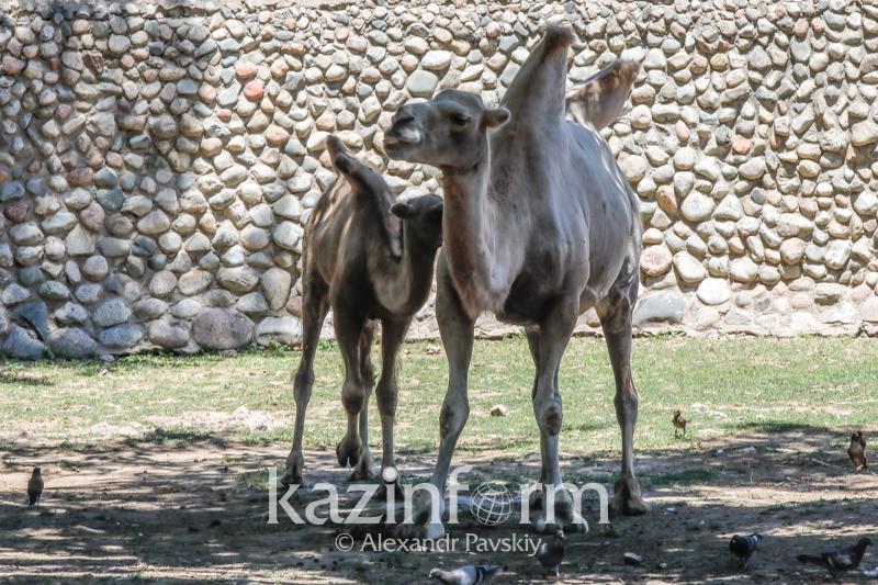 Almaty zoobaǵy bolashaqta qalaı ózgeredi