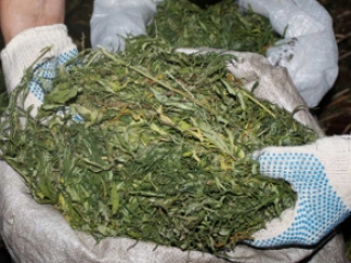 32yo citizen of Astana detained with 45 kg of marijuana